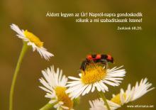 Zsoltárok 68,20